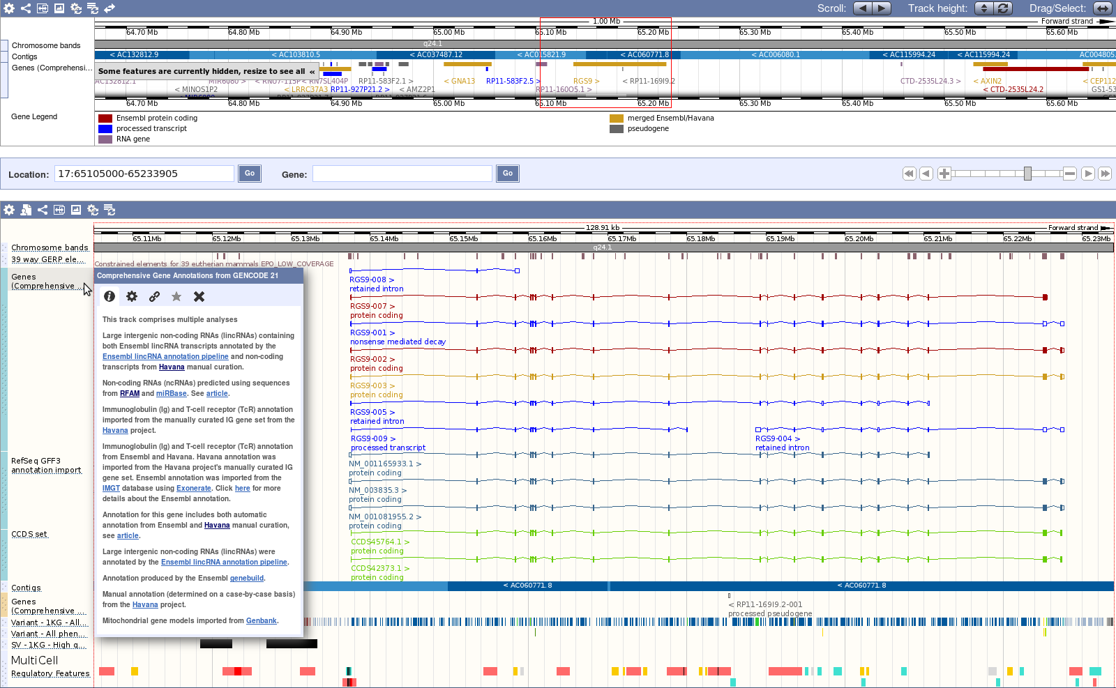 Screenshot of Ensembl browser showing GENCODE annotation